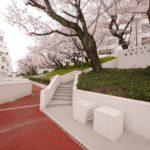 桜がキレイなマンション入口(外観)